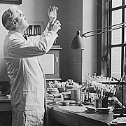 Alexander Fleming's lab