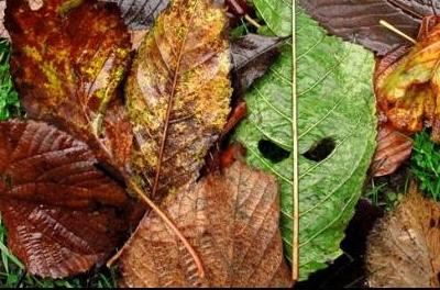 Evil leaf is evil